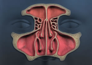 Healthy Sinuses
